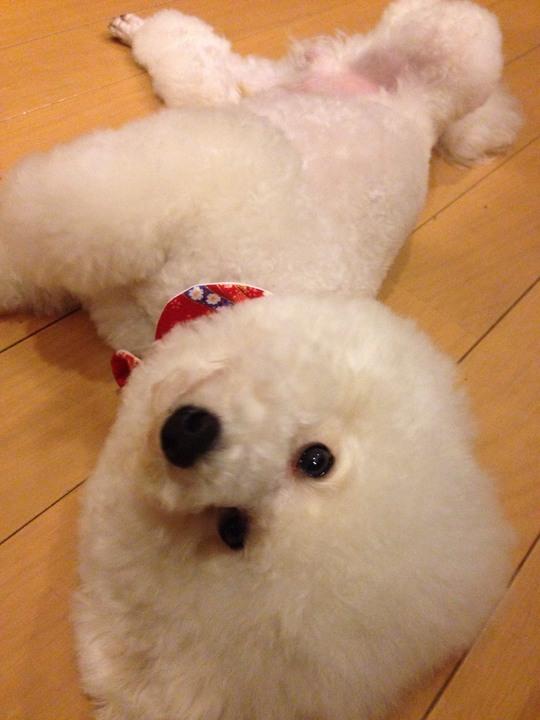 久しぶり登場愛犬ケンちゃん