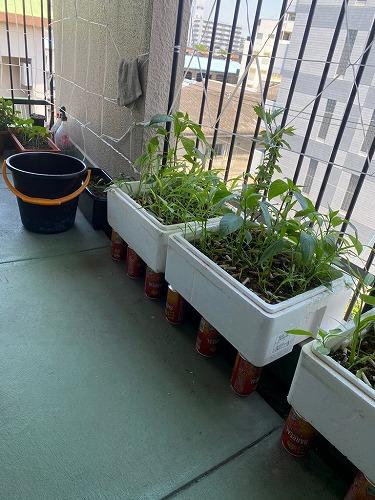 実習生社宅の家庭菜園。